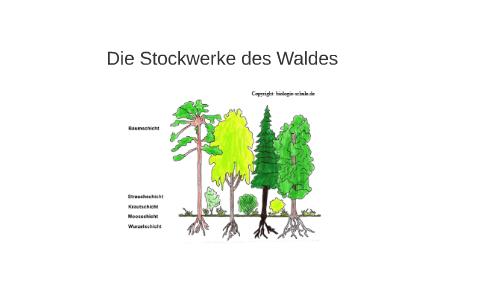 Die Stockwerke Des Waldes By Prezi User On Prezi