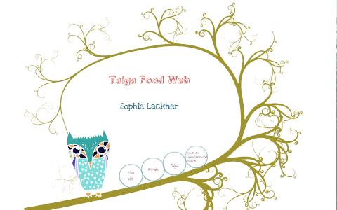 taiga food web by sophie l on prezi