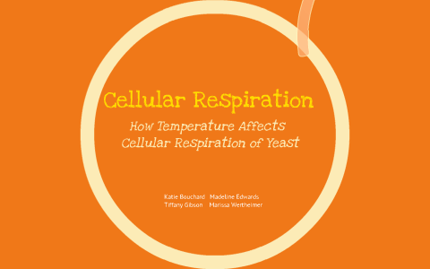 cellular respiration in yeast