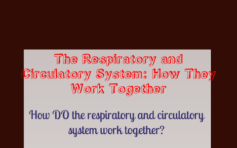 how do the circulatory and respiratory work together