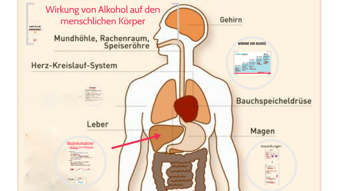 Wie Wirkt Alkohol Auf Den Menschlichen Körper