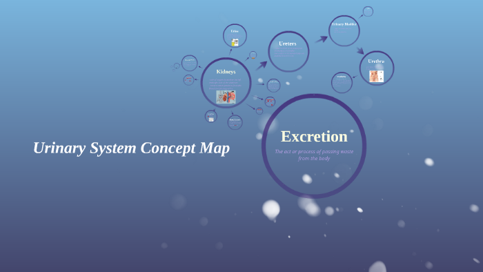 Urinary System Concept Map By Molly Plummer On Prezi