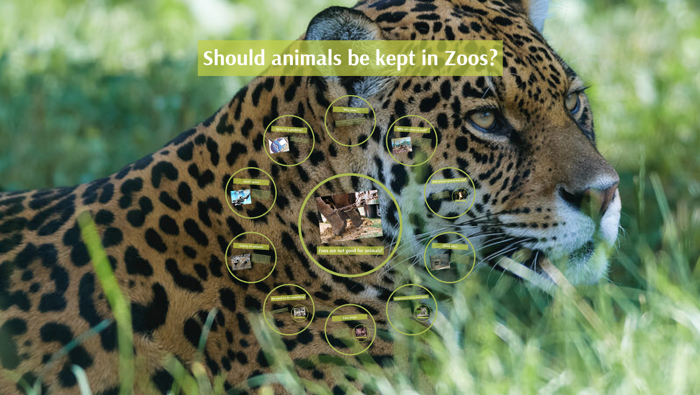 why should animals be kept in zoos