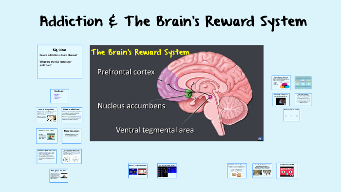 Addiction and the Brain's Reward System (updated 5.18.17) by James Truong