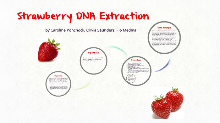 Strawberry Dna Extraction By Caroline Ponchock On Prezi Next