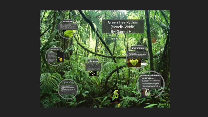 Green Tree Python - Garrett Hull by Karen Hull on Prezi