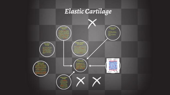 Elastic Cartilage By On Prezi Next