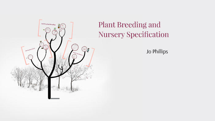 Plant Breeding And Nursery