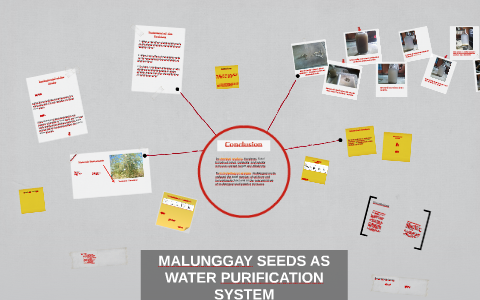 malunggay seeds as water purifier research paper