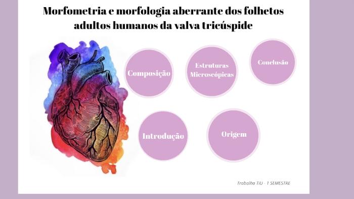 Morfologia Aberrante Dos Folhetos Adultos Da Valva