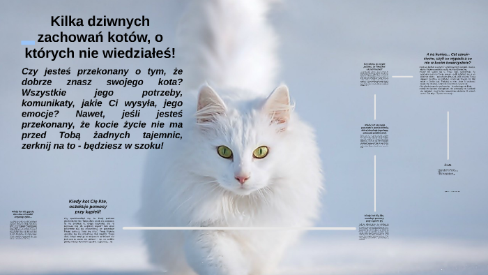 bdaef84f040485 5 dziwnych zachowań kotów, o których nie wiedziałeś by Zuzanna Bechcińska  on Prezi