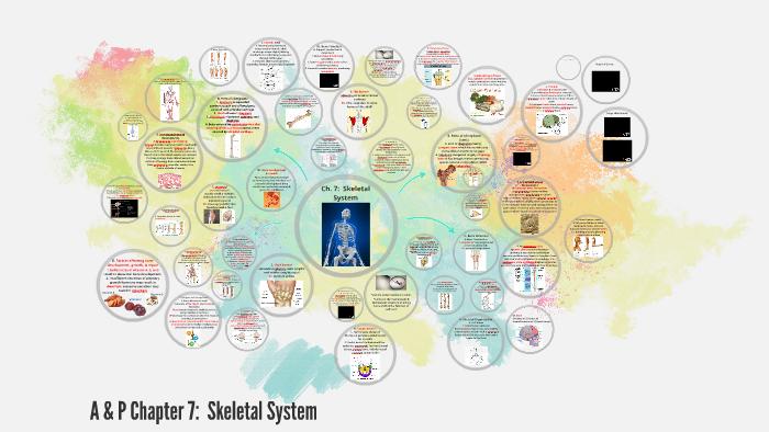 A P Ch 7 Skeletal System By Cynthia Boylan On Prezi
