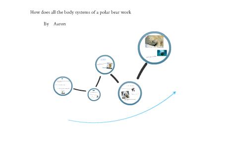 m35dhkyjxnipzsz6chyzmnmei36jc3sachvcdoaizecfr3dnitcq_3_0 how do polar bear's body systems work by room 605 on prezi