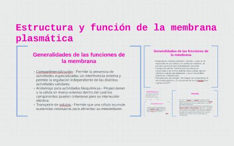 Estructura Y Función De La Membrana Plasmática By Sofía