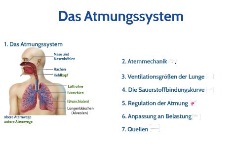 Das Atmungssystem By Nina Abc On Prezi