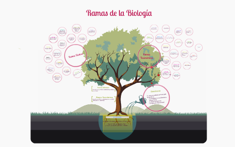 Ramas de la Biología by Ayari Salas Montano on Prezi