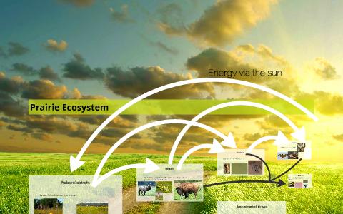 Prairie Ecosystem by Matt Urton on Prezi Next
