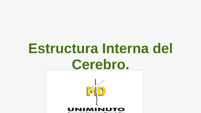 Estructura Interna Del Cerebro By Tatiana Martinez Osorio On
