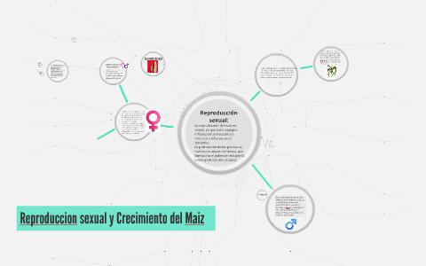 Reproduccion sexual y Crecimiento del Maiz by Ernesto