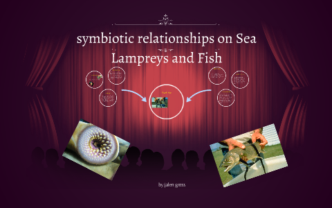Sea Lampreys And Fish By Jalen Gross On Prezi