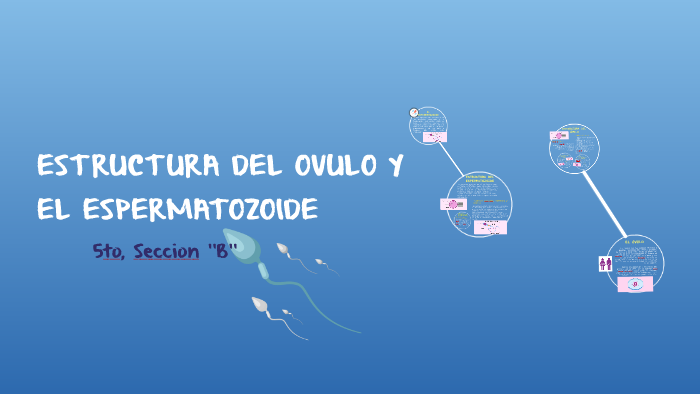 Estructura Del Ovulo Y El Espermatozoide By Patricia Paez On
