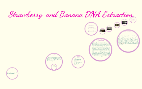 banana dna extraction lab report answers