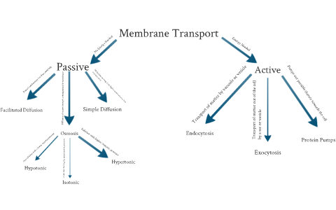 Cell Membrane And Transport Concept Map By Andrew Bove On Prezi