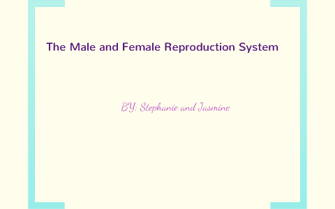 Reproductive System Concept Map.The Journey Of The Sperm Cells By Stephanie Hollatz On Prezi