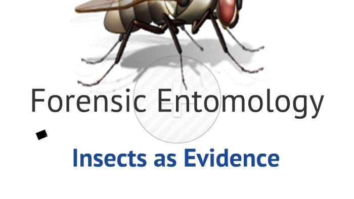Forensic Entomology by Jennifer Haycraft on Prezi