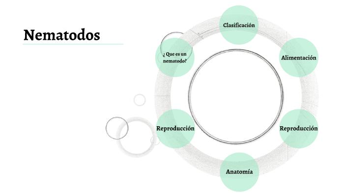 Nematodos by Sebastián Nangullasmú on Prezi Next