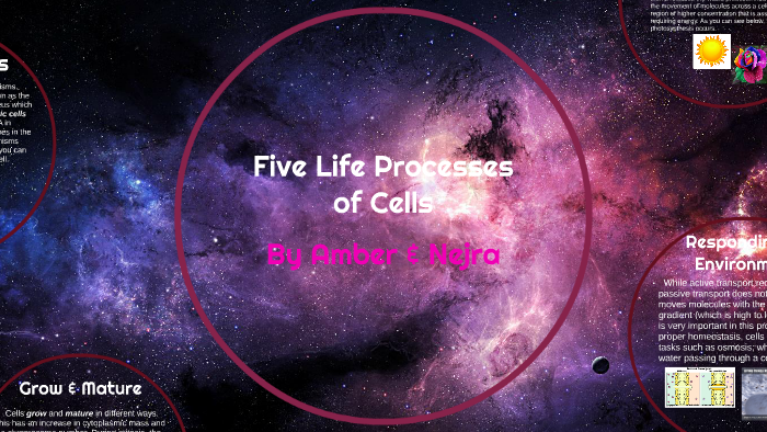 different life processes