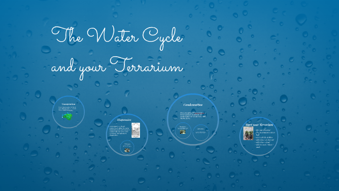 The Water Cycle And Your Terrarium By Menomin Hawpetoss On Prezi
