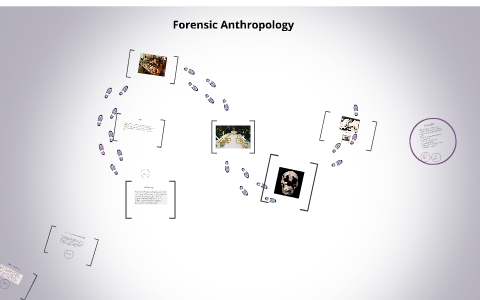Forensic Anthropology By Stephanie Williams