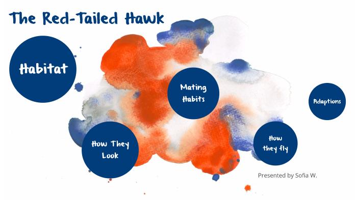 Red Tailed Hawk By Free Spirit On Prezi Next