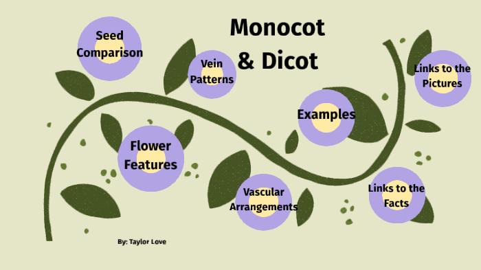 Monocot - Dicot by Taylor Love on Prezi Next