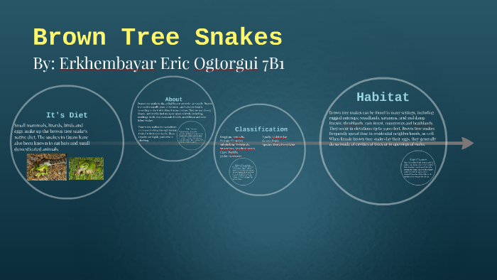 soo6nxyh2x7z7dh2jm2pfipcc76jc3sachvcdoaizecfr3dnitcq_3_0 brown tree snakes by eric ogtorgui on prezi