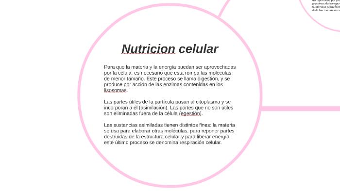 Nutricion Celular By Anto Carattoni On Prezi