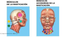 musculode de la varicoză perfuzie de castan în varicoză