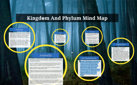 Image of: Biodiversity Researchgate Kingdom And Phylum Mind Map By Zarmeena Noor On Prezi