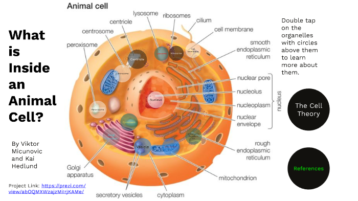what is inside an animal cell by viktor micunovic by viktor milan