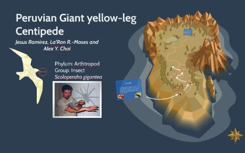 Peruvian Giant-yellow leg Centipede by La'Ron Moses on Prezi