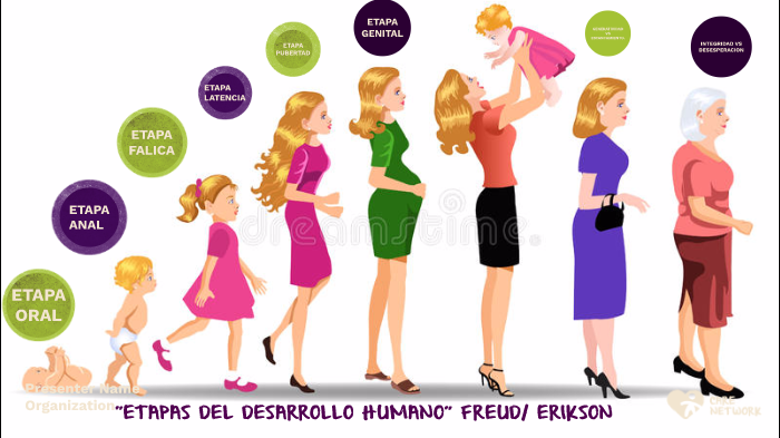 Etapas del Desarrollo Humano by Karina Zamora on Prezi Next