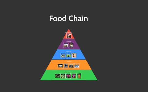 Food Chain By Lauren Camina On Prezi