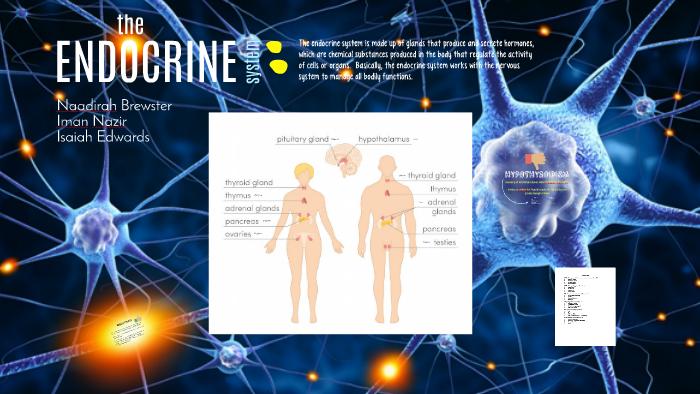 The Endocrine System By Safiya Patel On Prezi