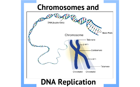 Biology Chapter 12 Section 2 Chromosomes and DNA ...
