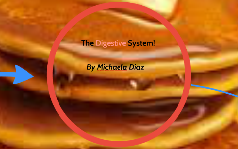 examples of mechanical and chemical digestion
