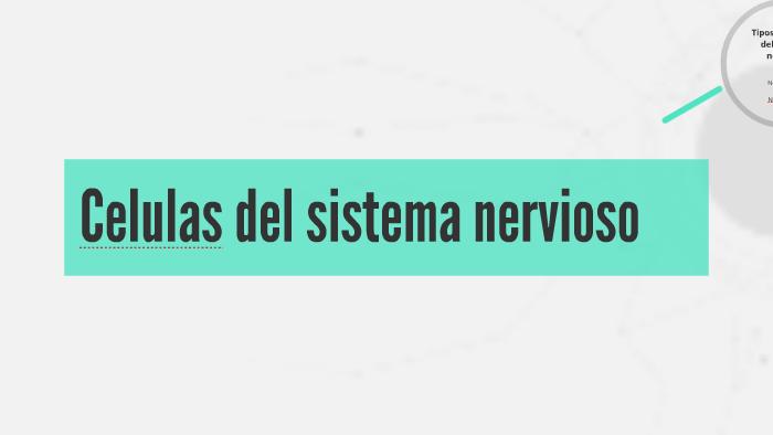 Celulas Del Sistema Nervioso By Deyvi Cuspian On Prezi