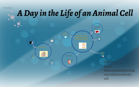 A Day in the Life of an Animal Cell by Amy Hudson on Prezi