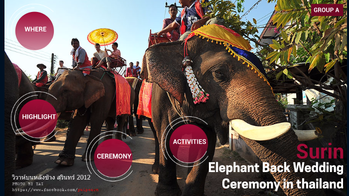 Group A Surin Elephant Back Wedding Ceremony In Thailand By Amiammp Ammp Baby elephant, birthday , party, wedding invitation, greeting note cards, lion, safari, giraffe transparent background png clipart. prezi