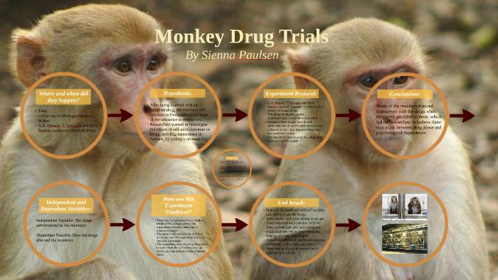 monkey drug trials 1969